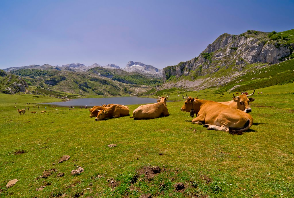 Lagos de Covadonga 70 km