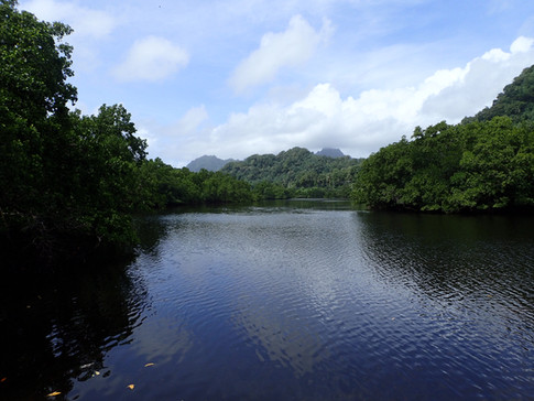 Perfect and peaceful - a mangrove inlet on the island of Kosrae in the Federated States of Micronesia
