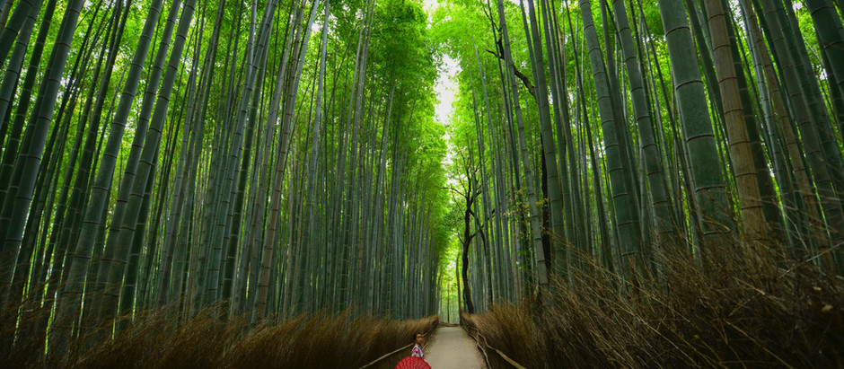 Making the Most of Japan