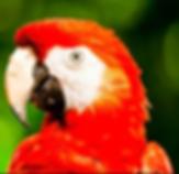 Panama parrot Panama City, Panama Amador Causeway Naos Harbour Island AirBnB