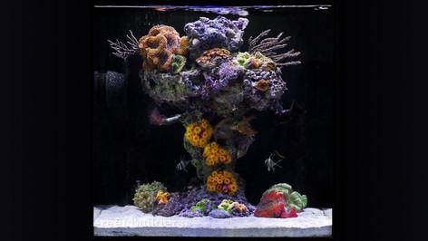 Reef Tank Designs made in Ceramic