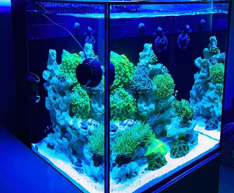Max Nano Aquascape with Torch Corals.jpg
