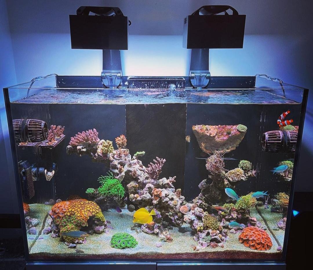 Custom Built Reef Tank Aquascapes