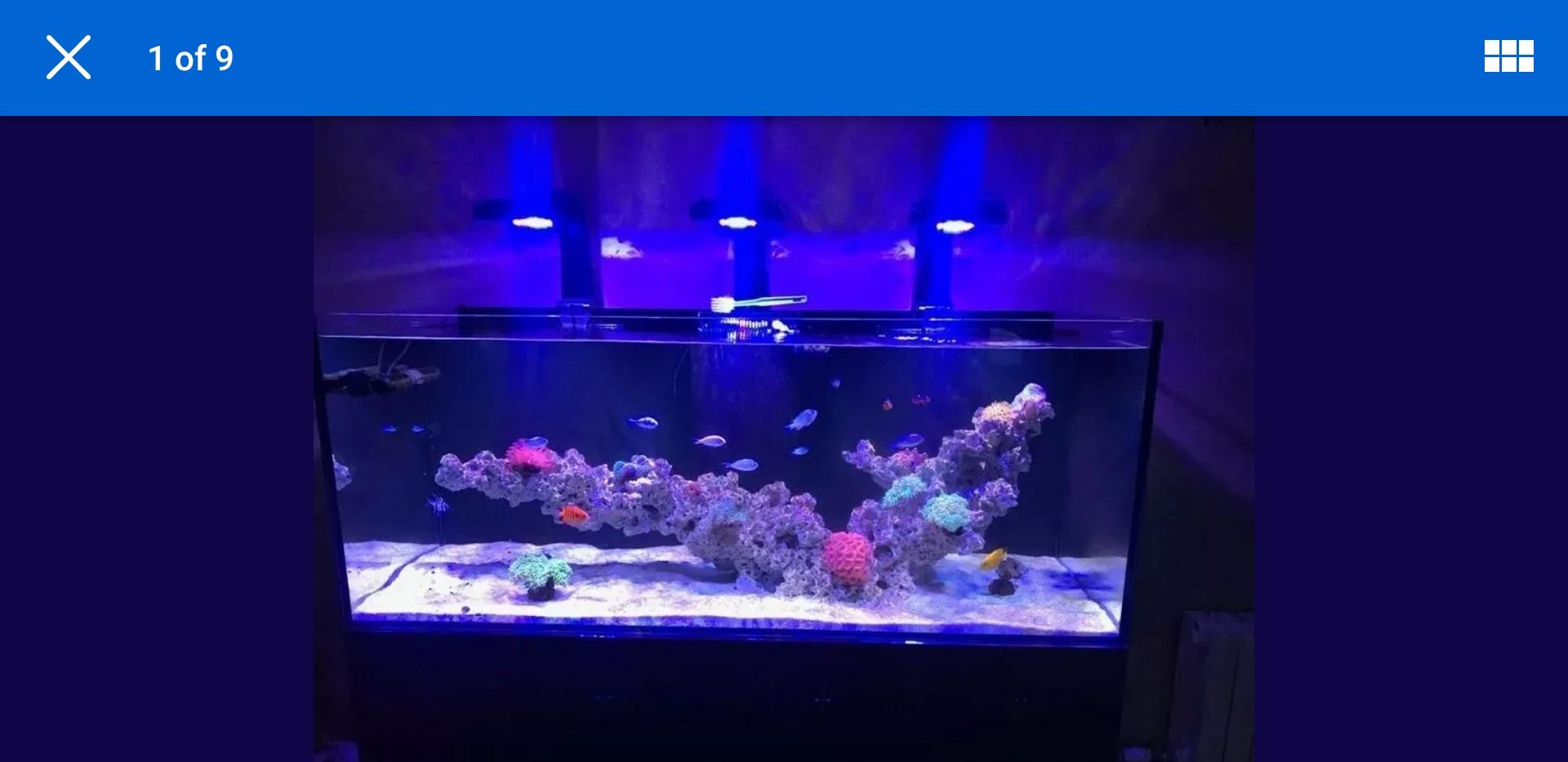 Custom Built Reef Tank Aquascapes.jpg