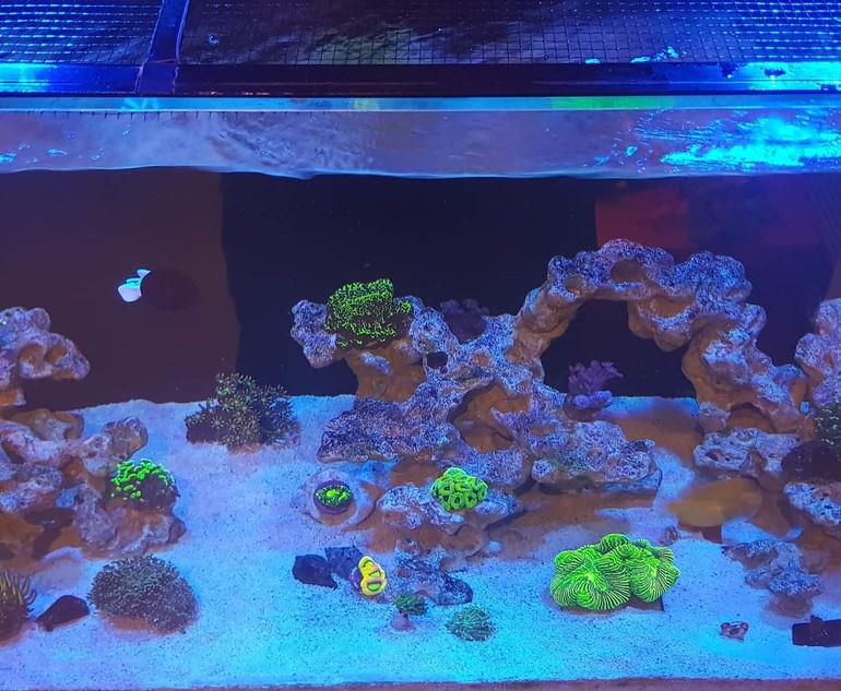 Custom Built Reef Tank Aquascapes.jpeg
