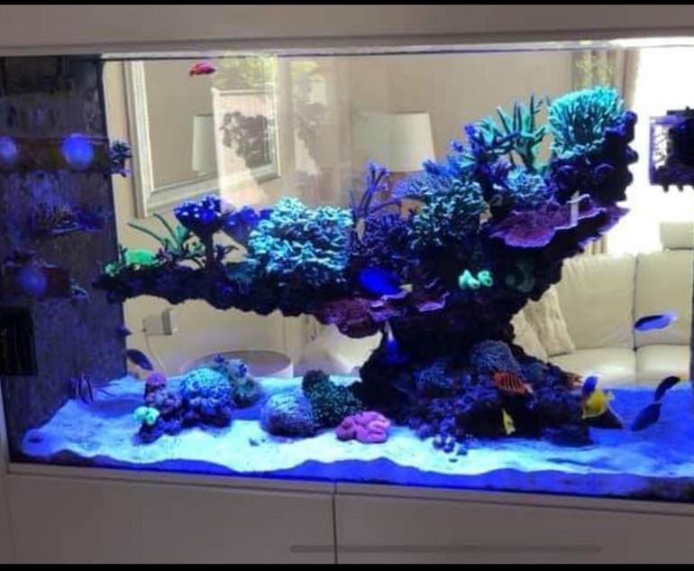 In wall reef tank aquascape
