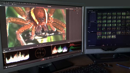 Ibex Films Edit Suite