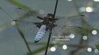 Dragonfly-Gallery.jpg