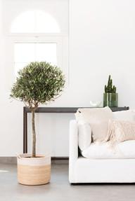 OLIVE TREE HOME & SOUL 3.jpg