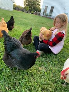 Their 7 year old chicken whisperer