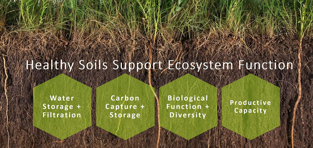 Healthy Soils Support Ecosystem Function
