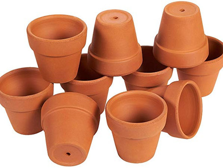 Let's Talk Container Gardening