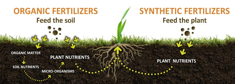 Cover Crops: The Solution to the Problem You Didn't Know You Had