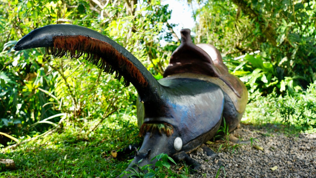 Come Take a Seat on Our Hercules Beetle!