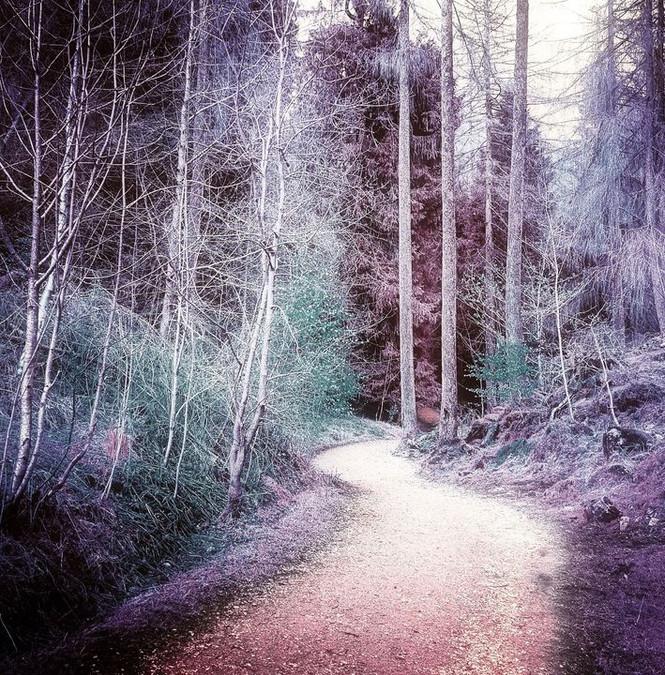 'The Winding Path'