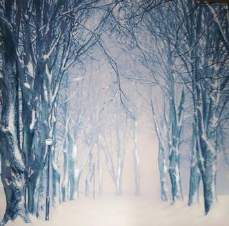 'Dreaming of Narnia'