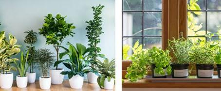Ways of Indoor Greening Design of Display