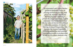 Artisanal winegrowers interview