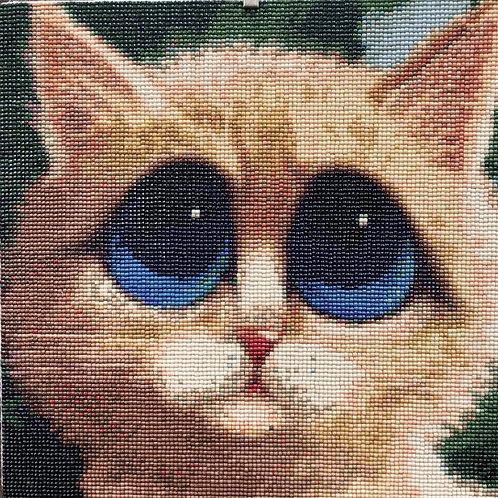 Big Blue Eye Cat