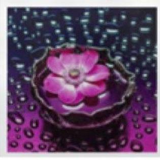 Rain Drop Flower