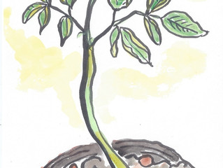 "YUKABON 5minutes drawing ""MORINGA """