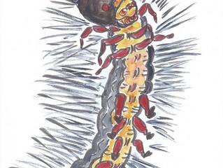 "YUKABON 5minutes drawing ""Horn Hair CATERPILLAR No.2 """