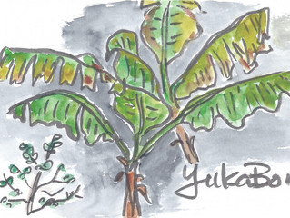 "YUKABON 5minutes drawing ""Little Bananas"""