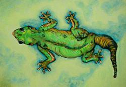 a.f.p.gecko