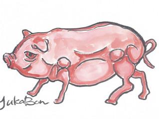 """YUKABON 5minutes drawing """"yukabon's correction Muscle Pink Pig"""""""