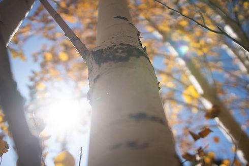 Vivid Fall Colors