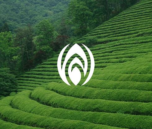 logo-image_44.png
