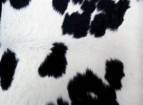 peau de vache.jpg