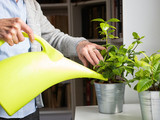 Growing Plants and Flowers Can Empower Homebound Seniors