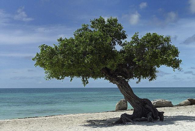 עצים לגינה למכירה