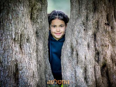 עצי זית מדהימים ומיוחדים בתל חדיד