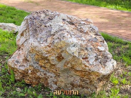 סלעים מיוחדים וחדשים הגיעו למסלעה, כנסו