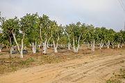 עצים לגינה