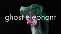 GailVIDEOghostelephantGRAPHIC.png