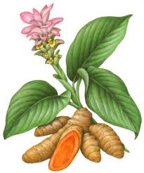 Turmeric - health benefits