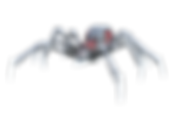 spider-1615195_1920.png