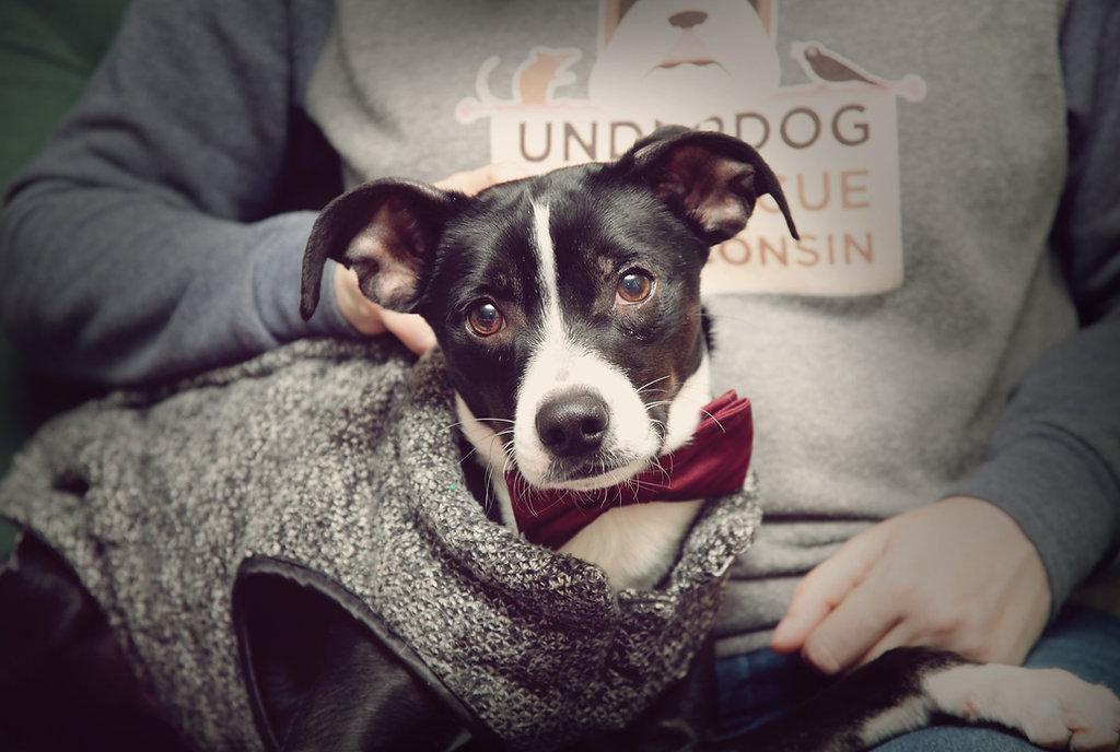 Underdog Pet Rescue of Wisconsin