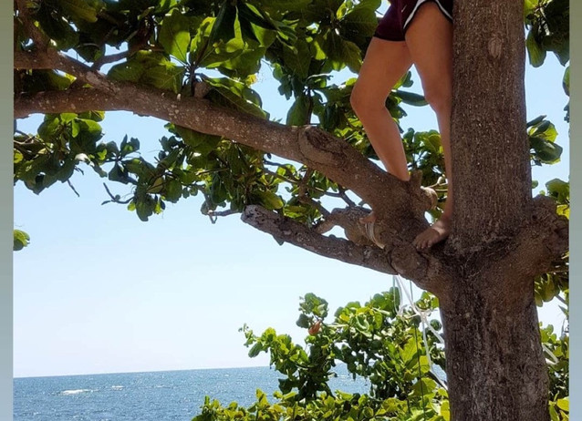 Tree climbing to get a better view.