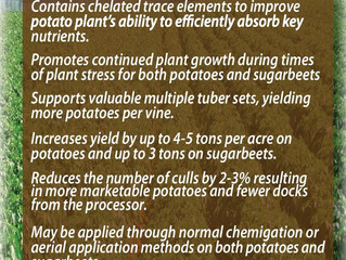 Solid Rebound Expected for Sugarbeet Industry