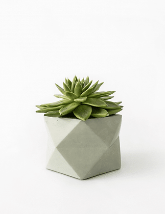 Palua Planter large Ø 8,5 cm 'House Raccoon' - Olive Green