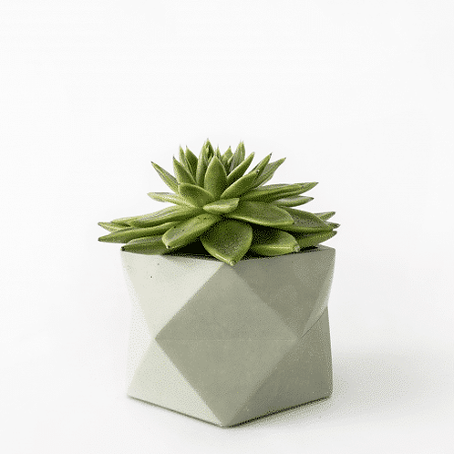 Palua Planter large Ø 8,5 cm 'House Raccoon' - Olive Green