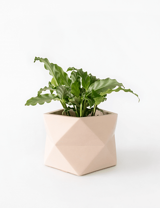 Palua Planter large Ø 8,5 cm 'House Raccoon' - Millennial Pink