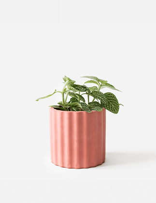 Mila Planter / Tealight Holder Ø 6 cm 'House Raccoon' - Pomegranate