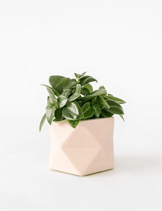Palua Planter medium Ø 5,5 cm 'House Raccoon' - Millennial Pink
