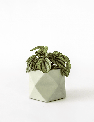Palua Planter medium Ø 5,5 cm 'House Raccoon' - Olive Green