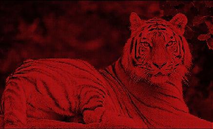 Tiger-Red.JPG